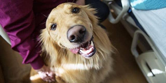 Che Cos'è la Pet Therapy e Quali Sono i Benefici