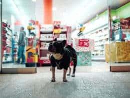 Migliori negozi di animali
